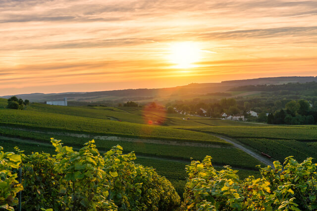 シャンパーニュの丘陵、メゾンとカーヴの画像 p1_11