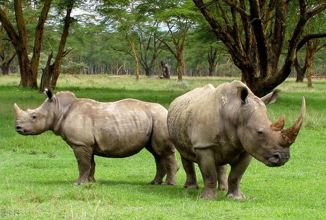 ガランバ国立公園の画像1