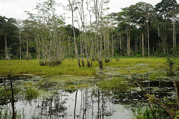 サンガ川流域の3カ国保護地域の画像1