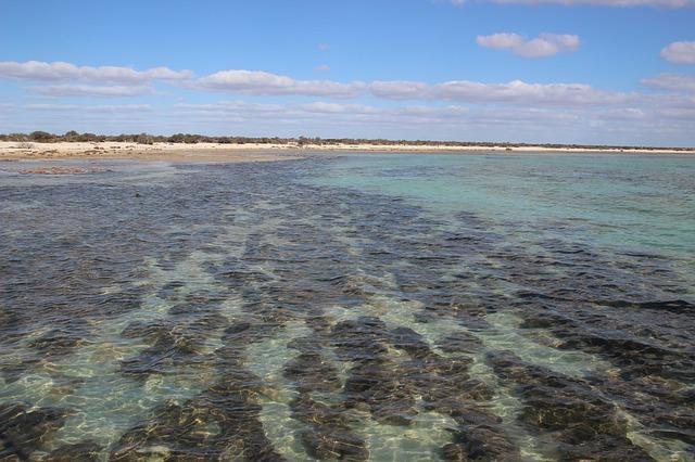 西オーストラリアのシャーク湾の画像1