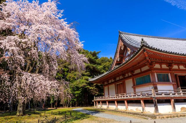 古都京都の文化財の画像26