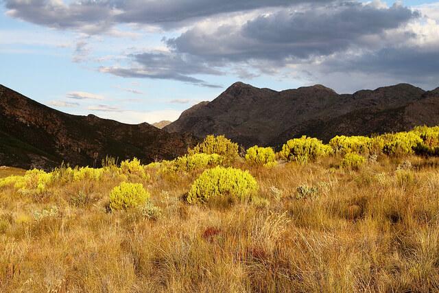 ケープ植物区保護地域群の画像2