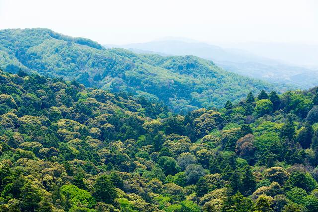 春日大社と春日山原始林の画像2