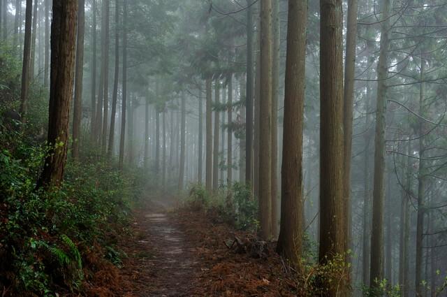 高野参詣道の画像2