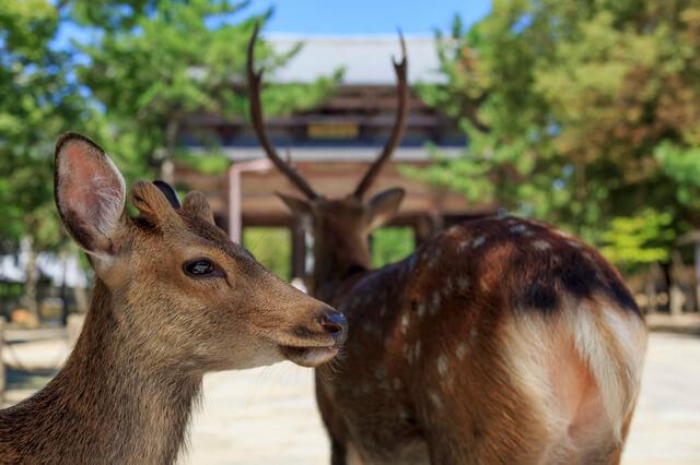 古都奈良の文化財の画像28