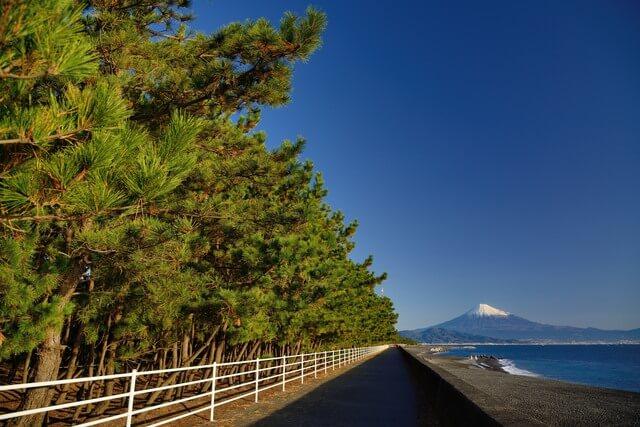 三保の松原の画像2