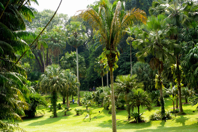 シンガポール植物園の画像1