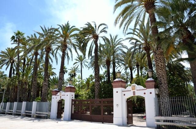 エルチェの椰子園の画像2