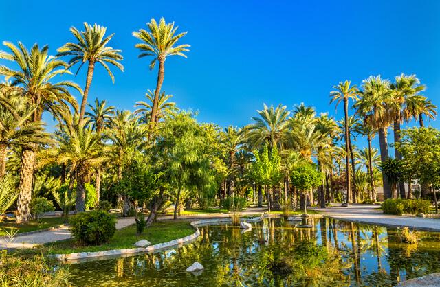 エルチェの椰子園の画像1
