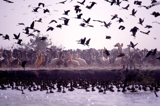 ジュッジ国立鳥類保護区の画像1
