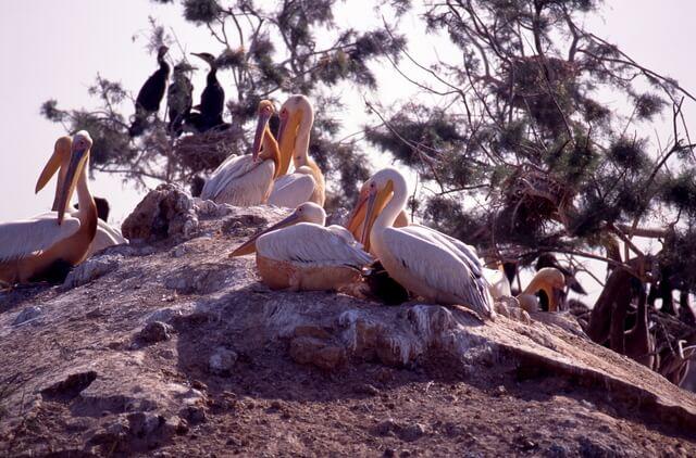 ジュッジ国立鳥類保護区の画像2