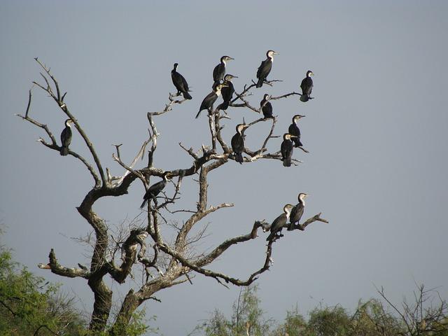 ジュッジ国立鳥類保護区の画像3