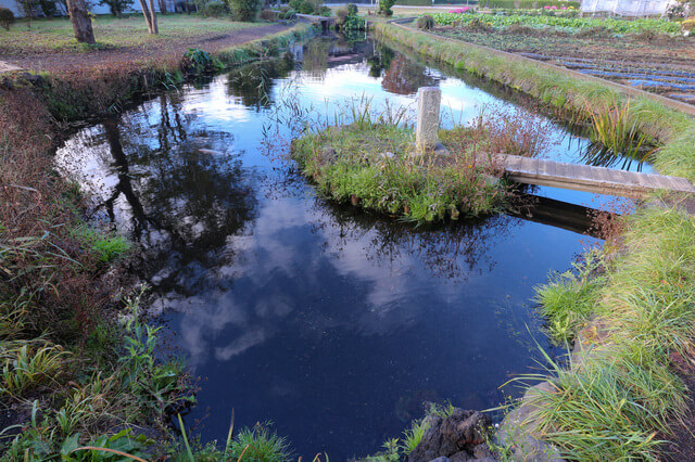 忍野八海:菖蒲池の画像2