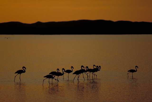 トゥルカナ湖国立公園群の画像1