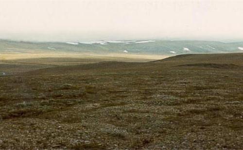 ウランゲリ島保護区の自然生態系の画像1