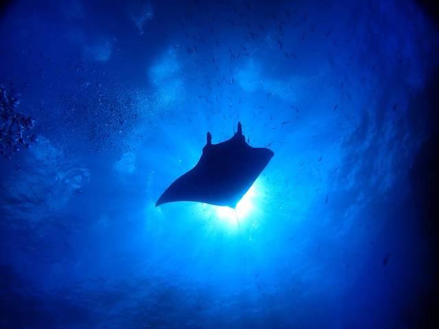 レビジャヒヘド諸島の画像1
