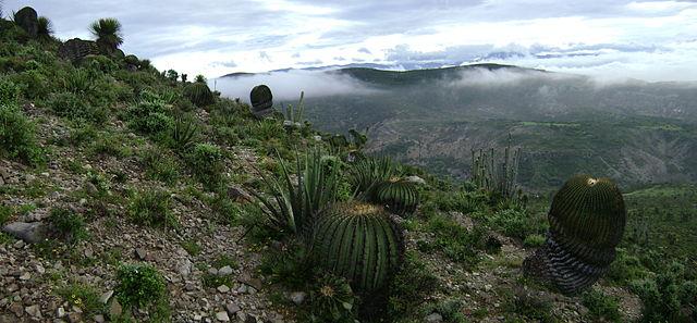 テワカン=クイカトラン渓谷 : メソアメリカの起源となる環境の画像1
