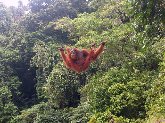 スマトラの熱帯雨林遺産の画像1
