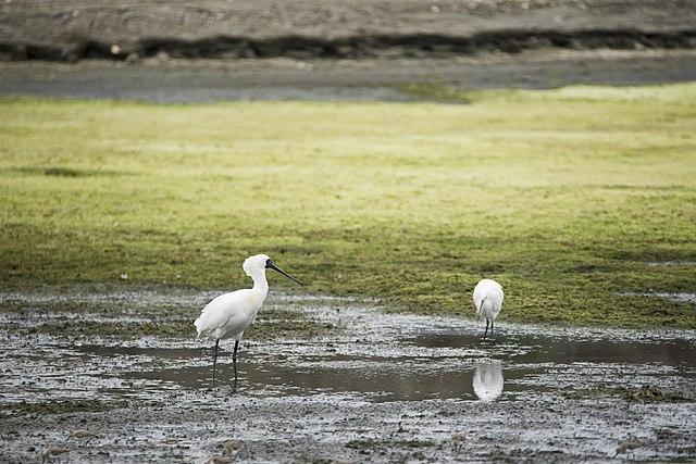 中国黄海-渤海沿岸の渡り鳥保護区群 (第一段階)の画像1