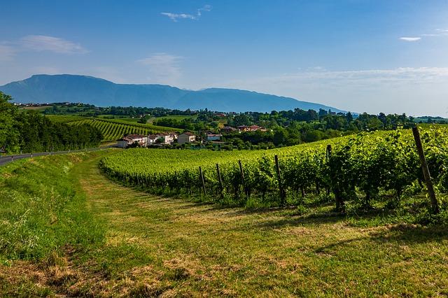 コネリアーノとヴァルドッビアーデネのプロセッコ栽培丘陵群の画像1