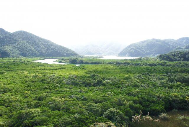 奄美大島、徳之島、沖縄島北部及び西表島の画像1