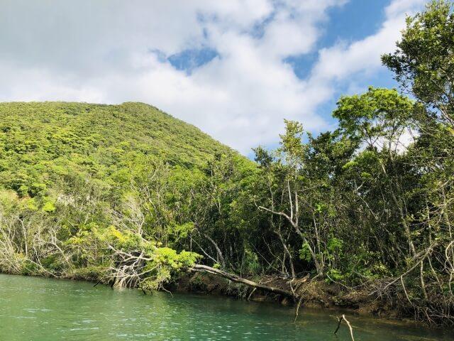 奄美大島、徳之島、沖縄島北部及び西表島の画像4