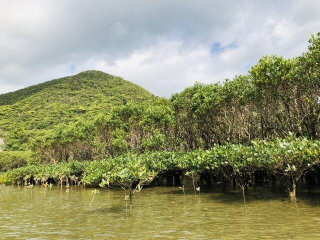 奄美大島、徳之島、沖縄島北部及び西表島の画像3