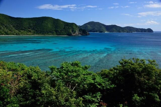 奄美大島、徳之島、沖縄島北部及び西表島の画像6
