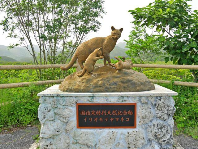 奄美大島、徳之島、沖縄島北部及び西表島の画像18