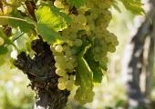 http://world-heritage.s3-website-ap-northeast-1.amazonaws.com/img/1493833284_vineyards-burgundy.jpg