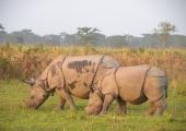 http://world-heritage.s3-website-ap-northeast-1.amazonaws.com/img/1503032261_manas-rhino.jpg