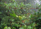 http://world-heritage.s3-website-ap-northeast-1.amazonaws.com/img/1504069016_タラマンカ山脈地帯-DirkvdM_cloudforest-jungle.jpg